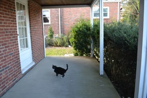 Random cat - look at the bush overgrowth along the porch